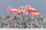 Thumbnail : Photo Of Pink Flamingo Surrounded By Chicks Wins Bird Photographer Of The Year