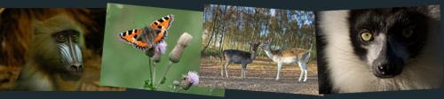 nature and wildlife photographs