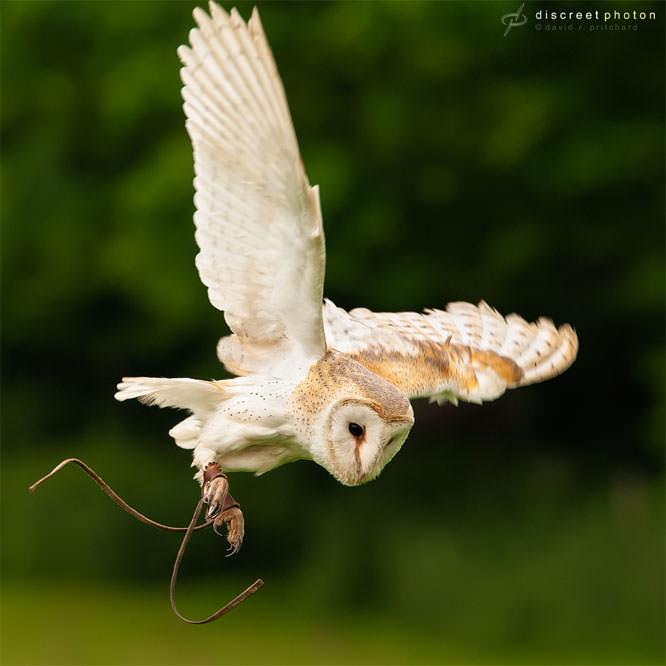 Discreetphoton owl