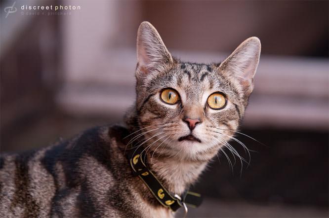 Discreetphoton cat
