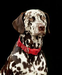 Thumbnail : Photograph Your Pets With Nikon Cameras