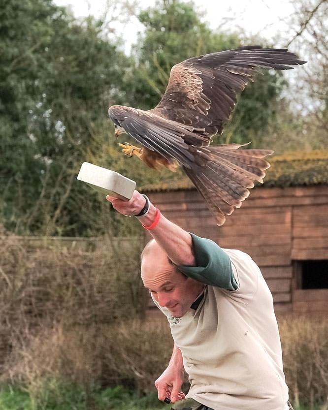Brian Wadie Black kite