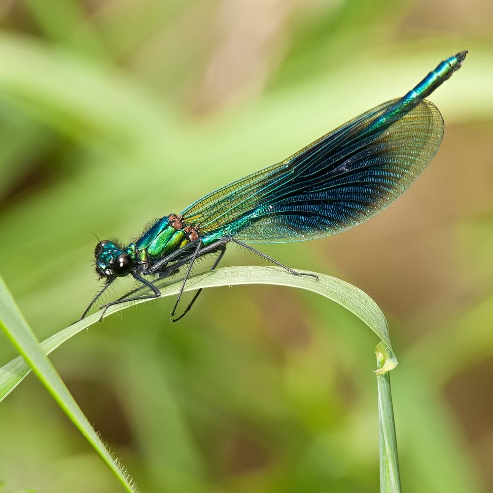 Photographing Dragonflies And Damselflies | ePHOTOzine 2