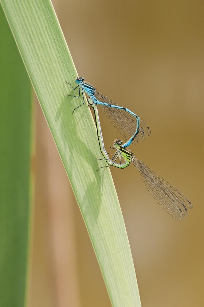Photographing Dragonflies And Damselflies | ePHOTOzine 1