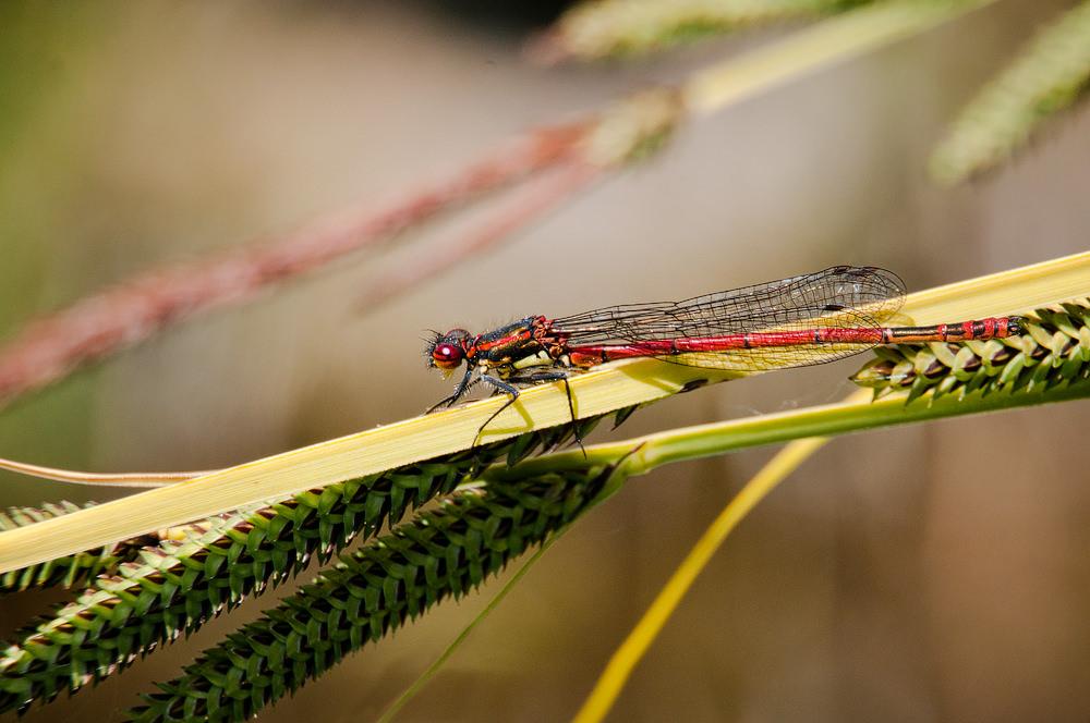 Photographing Dragonflies And Damselflies | ePHOTOzine 3