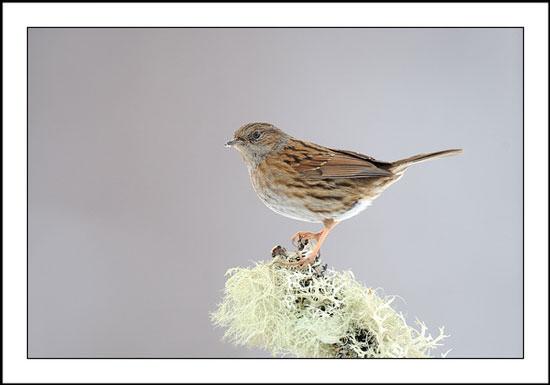 Photographing Garden Birds