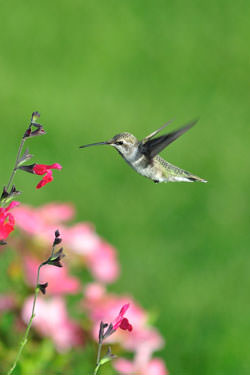 Hummingbird near some flowers
