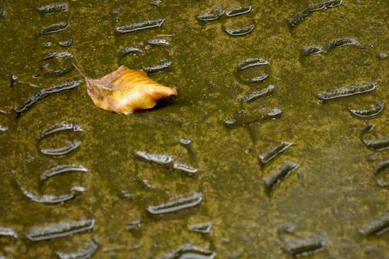 Gravestone and leaf