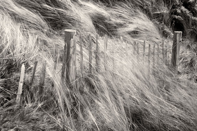 Coastal grasses - high winds