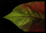 Thumbnail : Photography Tips On Capturing Shots Of Poinsettias At Christmas