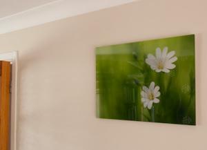 pixum acrylic on the wall