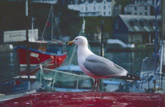 PT OF 8100 Gull Default Max |