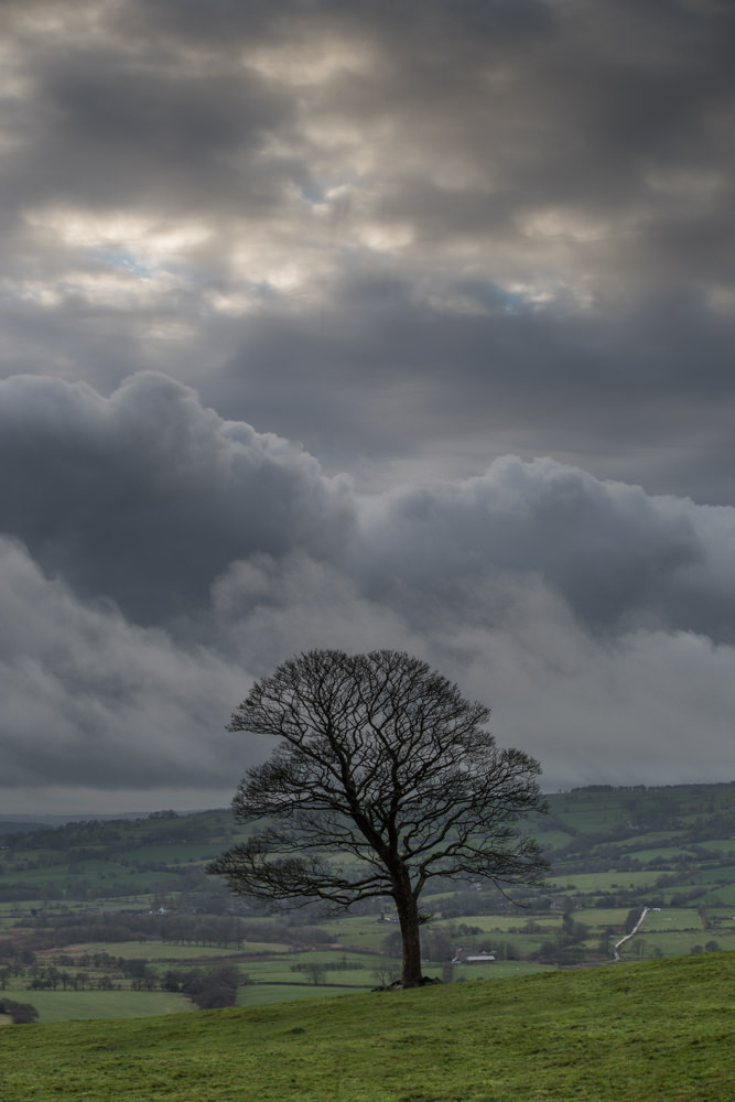 Andy's view of the same tree, pushing the tones for drama. Don't you wish you'd been there with us? © Andy Gray