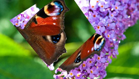 butterfly edit - flip wing