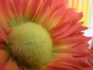 Ricoh CX5 Macro Flower