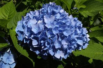 Ricoh GR Flower Study | 1/350 sec | f/11.0 | 18.3 mm | ISO 200