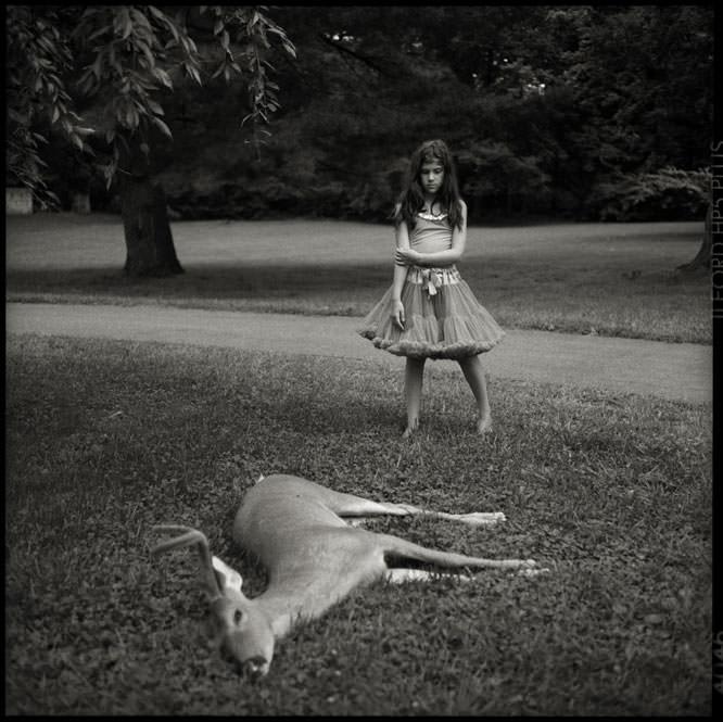 Dead Deer, Gaby Wood