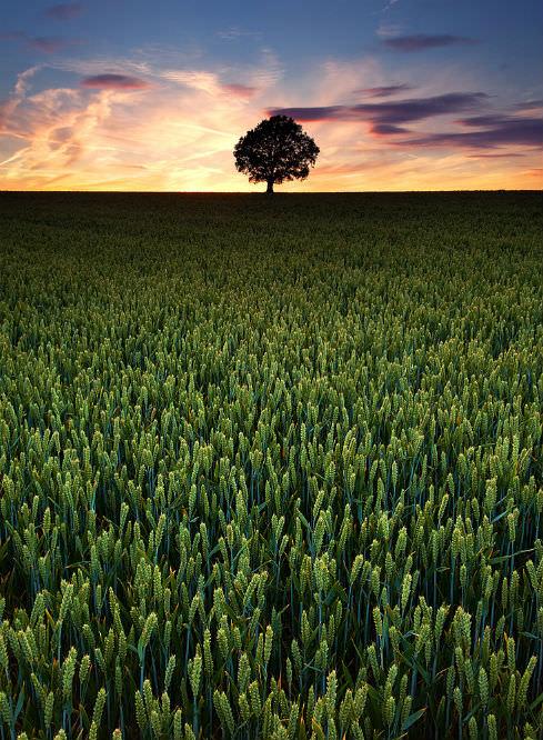 Field, sky and tree