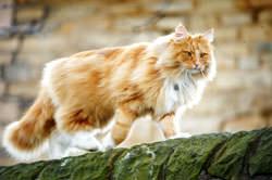 Sigma 150-500mm f/5-6.3 DG OS HSM cat
