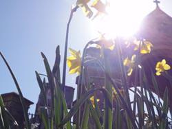 Sony Cyber-shot HX5 metering in direct sunlight