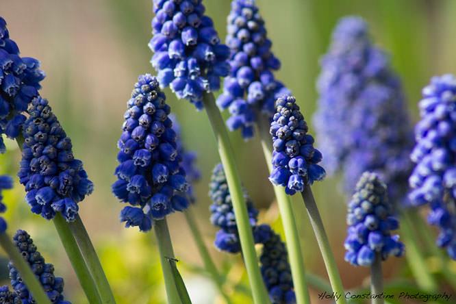 Spring Flower Macro Shots