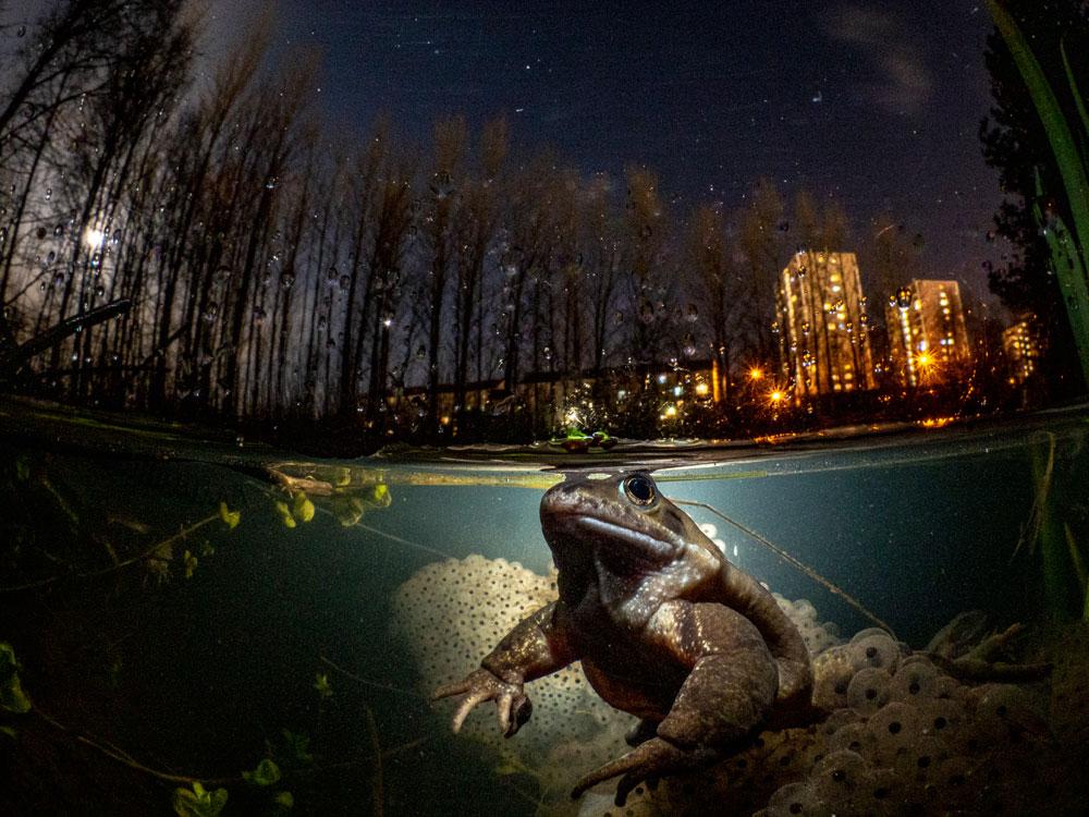 Mark Kirkland/UPY 2021 - Category Winner. British Underwater Photographer of the Year 2021. My Backyard Winner