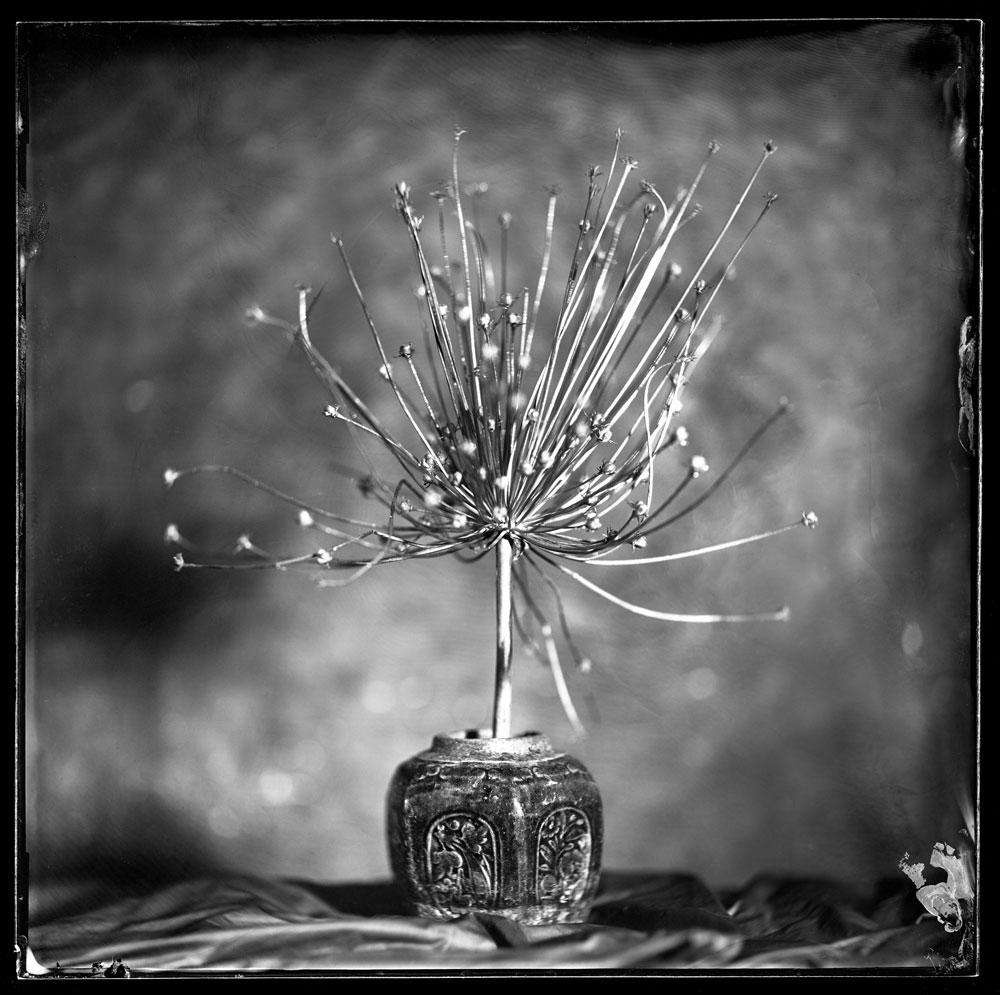 Still Life Composition, Shot on  Wet Plate