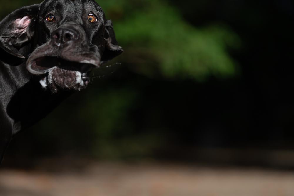 Shocked Mastiff