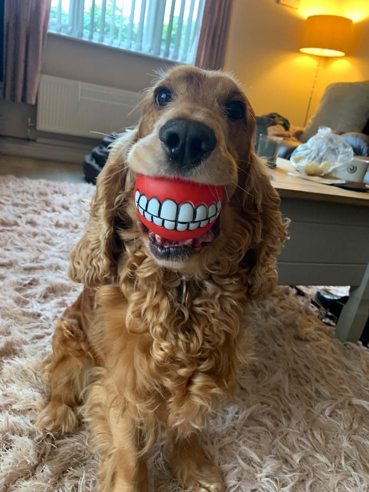 Buddy's new teeth
