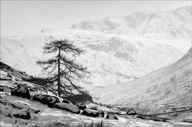 Black & White Snow Scene