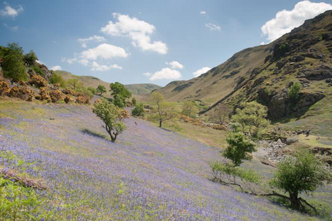 Shooting Spring Landscapes