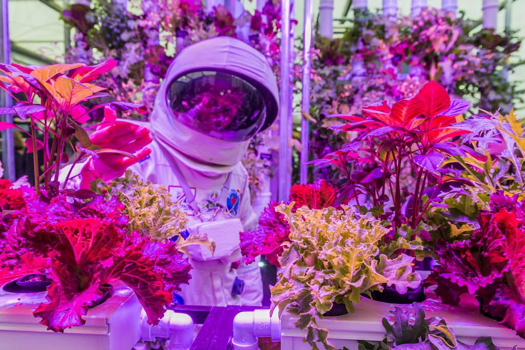 Hydroponics at RHS Chelsea Flower Show