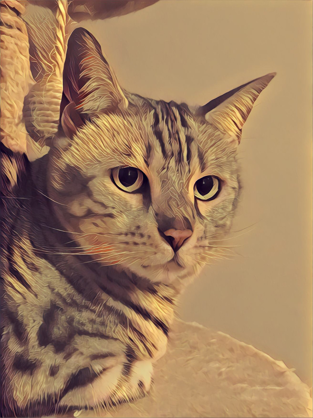 Prisma Photo Editorm - Cat photo edited
