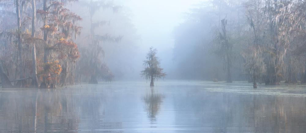 Lake Martin swamplands in Louisiana, USA.