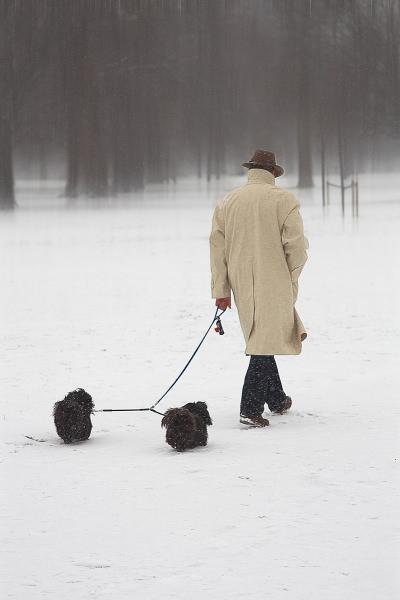 Dec PM week 3 man walking dogs in snow