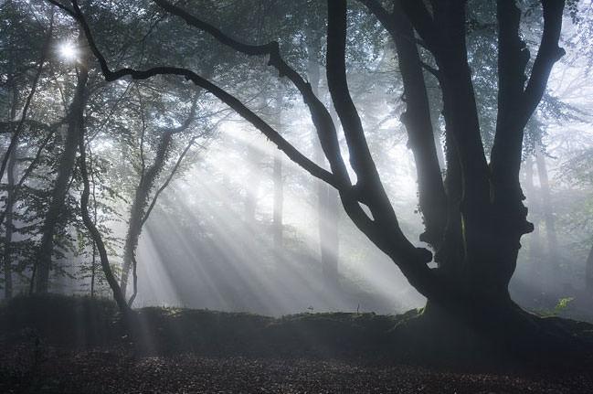 Light beams in woods