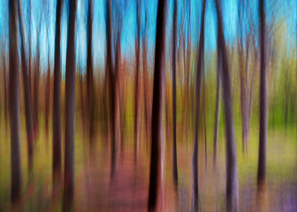 Forest Trees