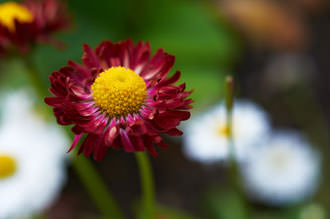 Tokina AT-X M35 Pro DX 35mm f/2.8 Macro Lens Out of focus areas are rendered smoothly