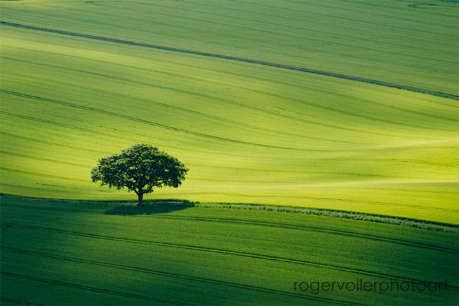 Tree rvoller