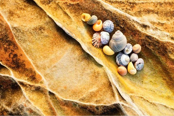 david clapp shells