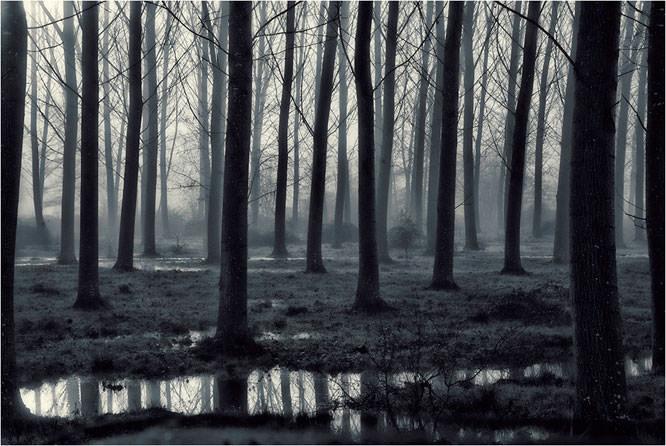 Morning Bog