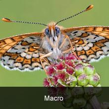 10 Top Macro Shots