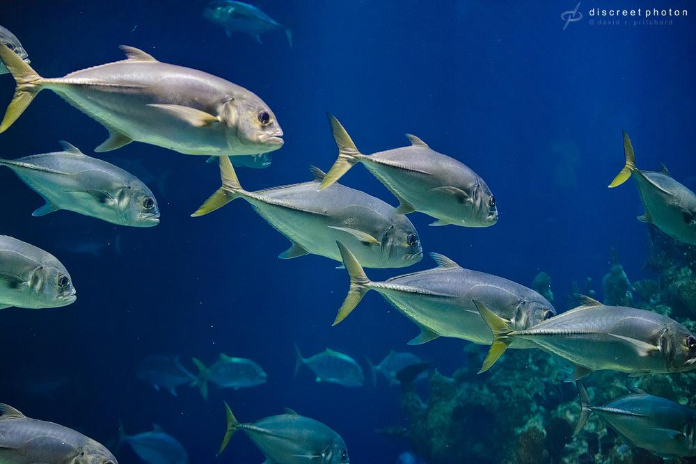 David Pritchard low light aquarium
