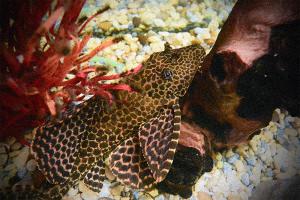 Underwater Film Camera Advice