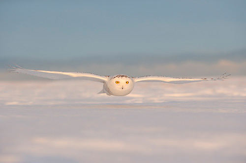Bird in flight by Andy Rouse
