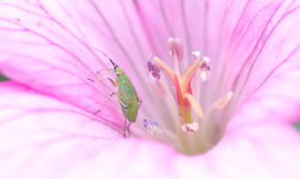 a bug in a flower