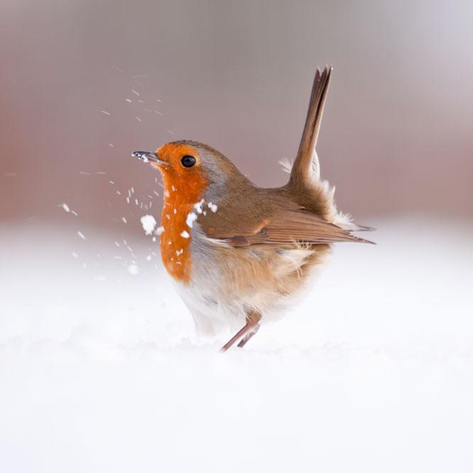 Veolia Environnement Wildlife Photographer Of The Year