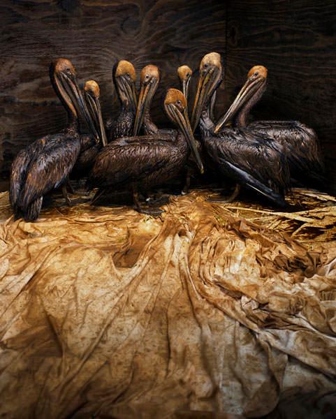 Still life in oil © Daniel Beltrá.