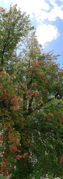 panoramic tree 2