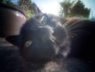 cat face close up with pinwide